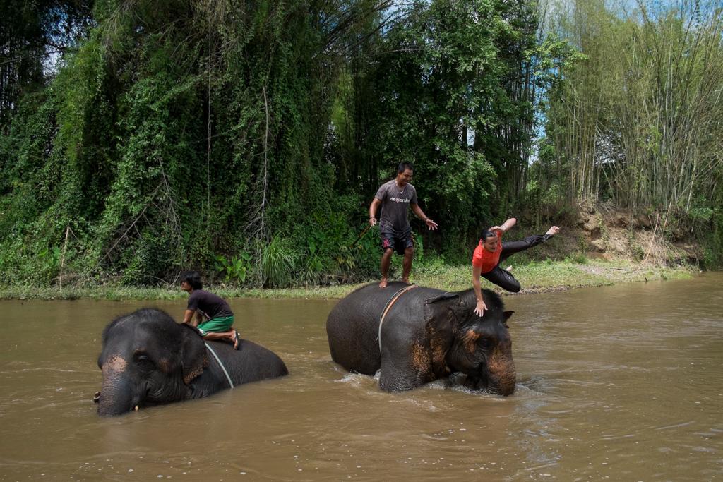 Sur la tête d'un éléphant...
