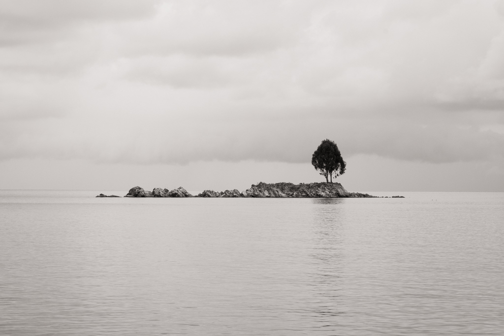 Arbre île du soleil