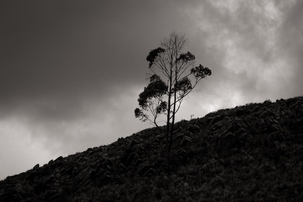 Arbre Tarabuco pluie