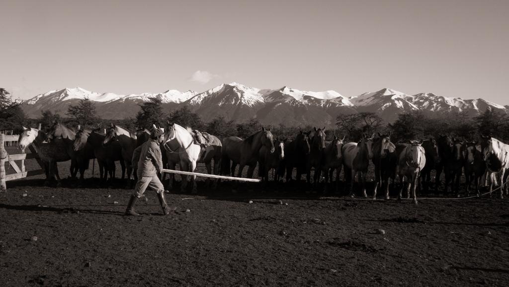 Bernardo aligne les chevaux