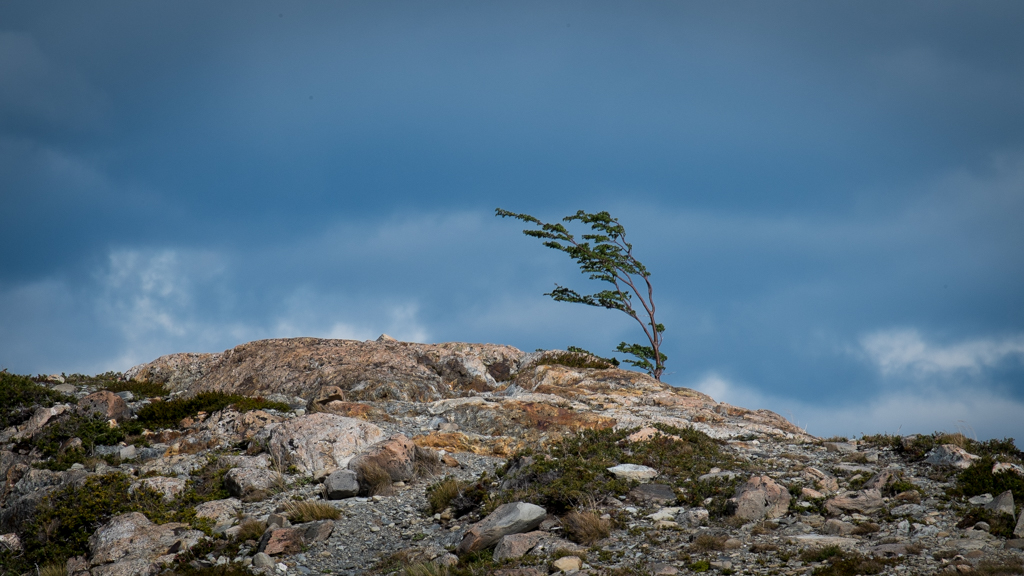 Arbre vent Torres del Paine