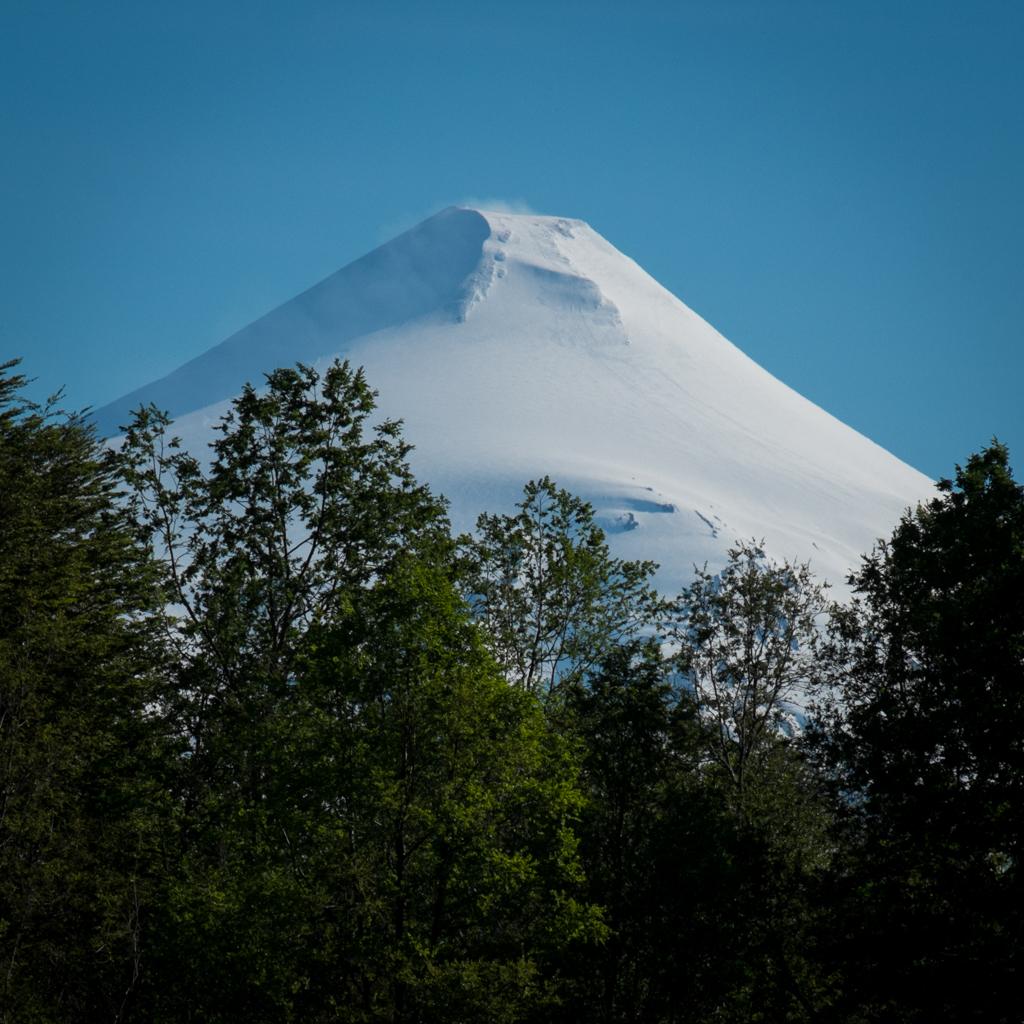 Volcan Villarica forêt